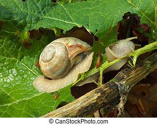 Breakfast of the snail
