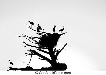 Cigüeñas, nido