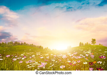 Summer evening on the meadow. Abstract environmental backgrounds