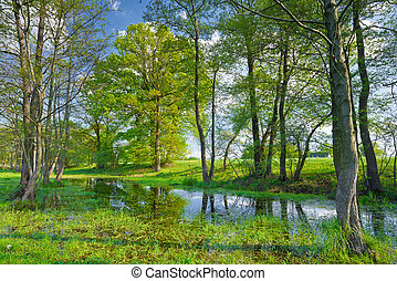 Trees in the swamp Nature reserve - Sunny spring landscape...