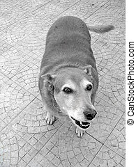 Funny looking dog - Funny looking domestic dog looking up at...