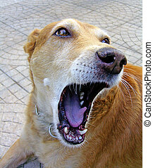 Open mouth - Domestic dog with a wide open mouth