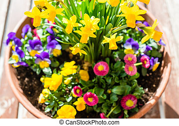 Spring plant arrangement in flower pot