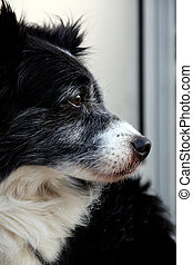 domestic dog - Close detail of the head of a domestic dog...