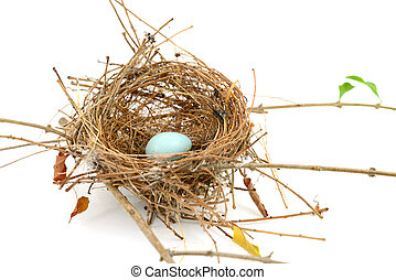 bird nest isolated on white