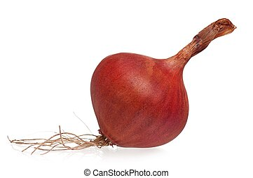 Purple onion with roots isolated on white background...