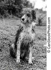 Wet domestic dog - Full body view of a abandoned domestic...