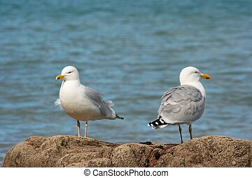 Seagulls standing on a rock