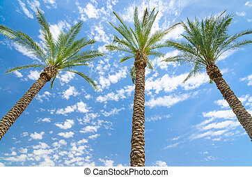 Three date palms against deep blue sky with clouds