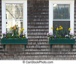 windows of flowers - Nantucket flower box with windows