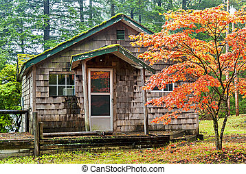 Cabin in the rain forest of Oregon
