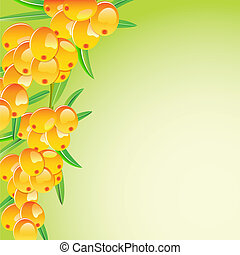 sappy sea-buckthorn berries card isolated on white...