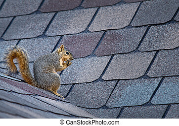 Squirrel on the roof - Cute squirrel sitting on the roof
