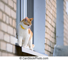 Red little cat on window