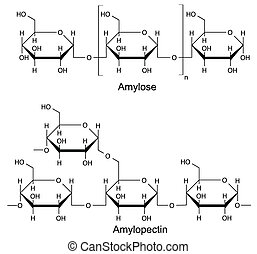 Structural components of the starch: amylose, pectin 2D...