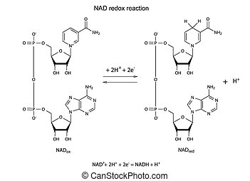 Illustration of NAD redox reaction with chemical formulas,...