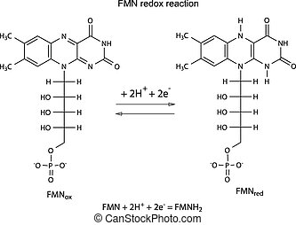 Illustration of FMN redox reaction with chemical formulas,...