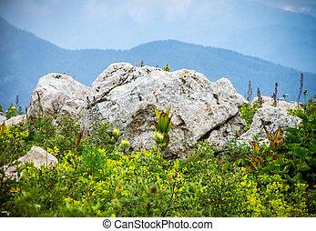 montagne, valle, natura, estate, verde, fiori, paesaggio