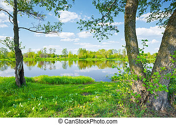 Spring landscape. Trees on riverbank of The Narew River.