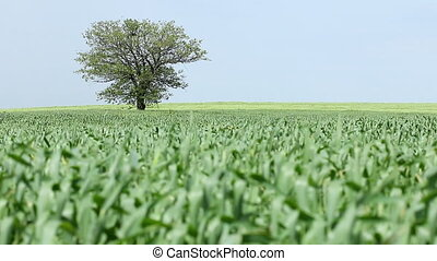 tree and green wheat field