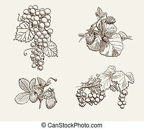 ripe berries
