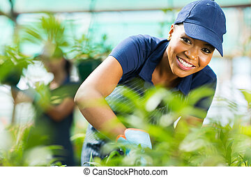 young african female nursery worker working in greenhouse -...