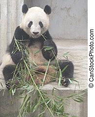 Giant Panda Research Base in China - Giant Panda Research...