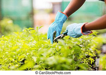 jardineiro, aparando, planta