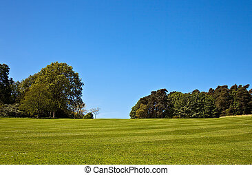 Striped lawn - A beautiful striped lawn with trees in the...