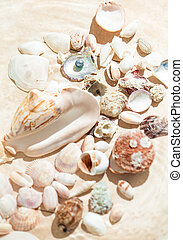 photo of shells and pearl lying on sand - Closeup photo of...