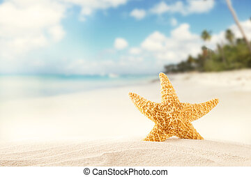Summer beach with strafish - Summer concept with sandy beach...