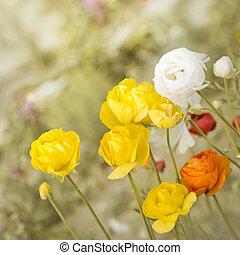 photos de nature rose papier peint briar jaune buisson fleurs csp25391932. Black Bedroom Furniture Sets. Home Design Ideas