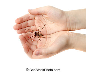 Spider in the childrens hands isolated on white background
