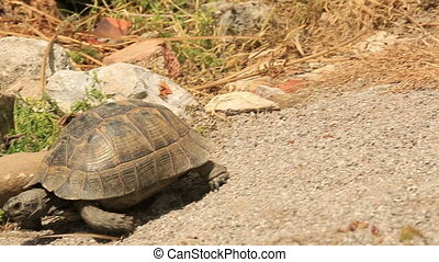 Turtle fastly walking in nature