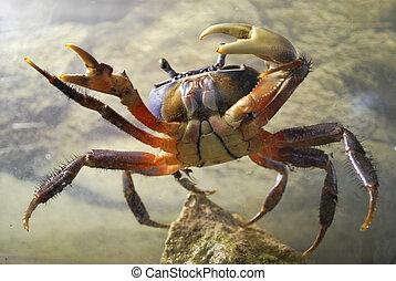 crab in aquarium