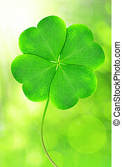 clover  - Green clover leaf