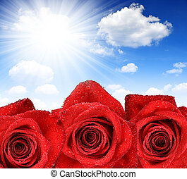 Dewy Rose on sunny sky