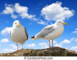 Seagulls on  blue sky