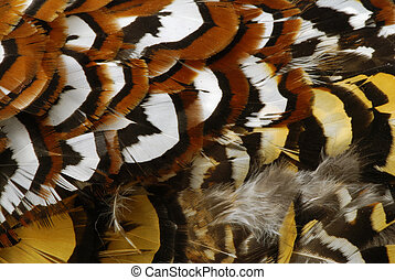 Pheasant feathers - Deatailed texture of golden pheasant...