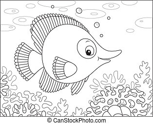 Tropical fish - Exotic fish swimming on a coral reef