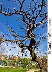 Tree in Botanical garden in Zagreb