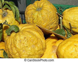 citrus fruits for sale in Amalfi, I - fruits of citron for...