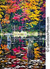 reflexiones, escena, otoño, pantanal