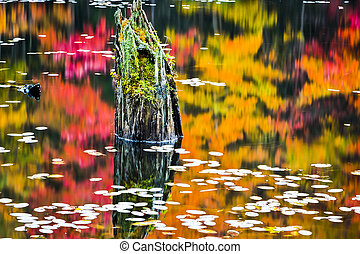 Reflections in Scene Autumn Marshland