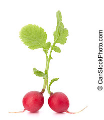 Small garden radish with leaves isolated on white background...