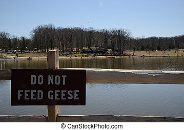 Do not feed the Geese