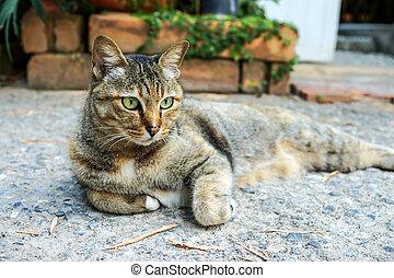 Mirar, enojado, gato