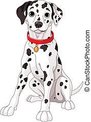 CÙte, dalmatiner, hund