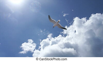 flying dominican gull - sky clouds and gull