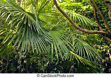 Tropical Rainforest Plants - This shot depicts a tropical...